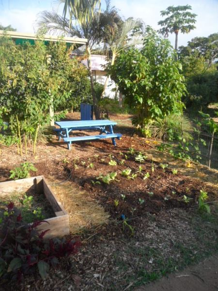 Garden at Kihei Elementary December 2015