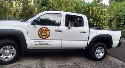 Photo of Hawaii Animal Rescue Foundation's new truck jpg
