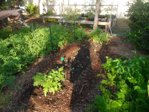 Thriving gardens from students at Kiheil Elementary